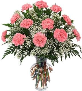 Carnations By The Dozen