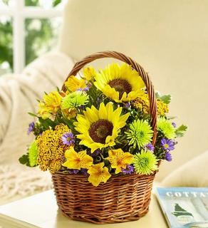 Fields of Europe™ for Summer Basket