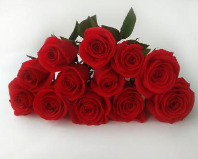 Red Roses Galore